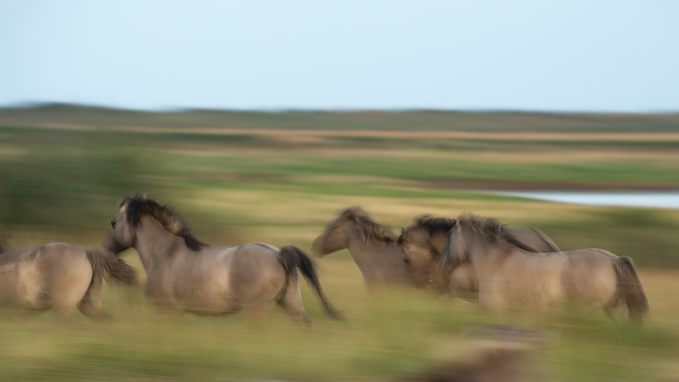 Read more about the article Wild Horses